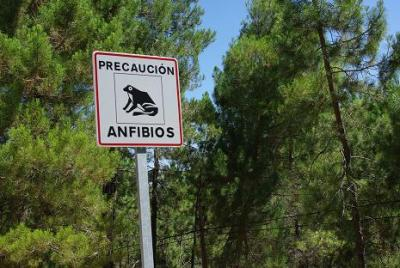 20090910052229-peligro-anfibios.jpg