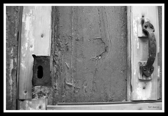 20140321142408-pulgas-domesticas2.jpg